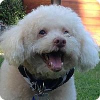 Adopt A Pet :: Connor - La Costa, CA