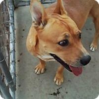 Adopt A Pet :: Melanie - Perris, CA