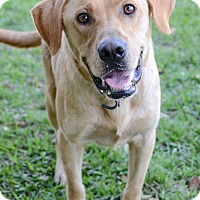 Adopt A Pet :: Jackson - Charlemont, MA
