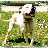 Adopt A Pet :: Tina - Dillon, SC