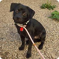 Adopt A Pet :: Noah - Mukwonago, WI