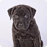 Adopt A Pet :: John Coffey - Adoption Pending - West Allis, WI