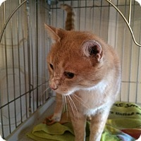 Adopt A Pet :: Franken Freckles - Rochester, NY