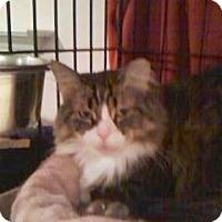 Adopt A Pet :: Mocha - Colmar, PA