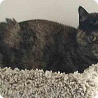 Adopt A Pet :: Tallulah - Gaithersburg, MD