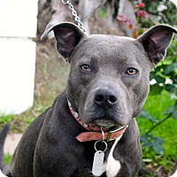 Adopt A Pet :: MJ - Los Angeles, CA