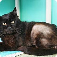 Adopt A Pet :: Kiwi - Bellevue, WA