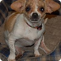 Adopt A Pet :: Cali - Orlando, FL