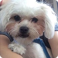 Adopt A Pet :: Queenie - Encino, CA