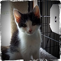 Adopt A Pet :: WILLOW - Medford, WI