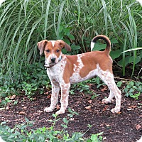 Adopt A Pet :: Jody- Foster to Adopt - Wood Dale, IL