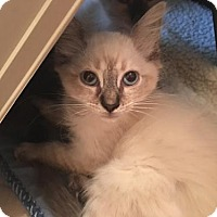 Adopt A Pet :: Ajax - Austin, TX