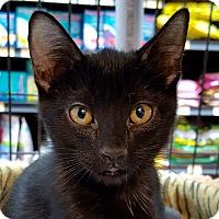 Adopt A Pet :: Sloan - Toronto, ON