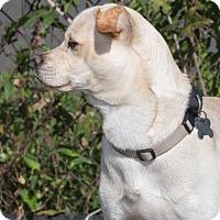 Adopt A Pet :: Marty - Elmwood Park, NJ