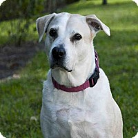Adopt A Pet :: DIXIE - West Palm Beach, FL