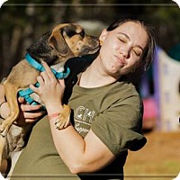 Adopt A Pet :: Emmae - Ashland, WI