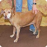 Adopt A Pet :: A605236 - Louisville, KY
