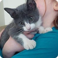 Adopt A Pet :: Baie - Ennis, TX