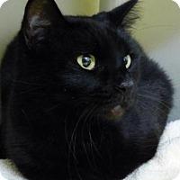 Adopt A Pet :: Vi - Millersville, MD