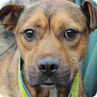 Adopt A Pet :: Luna - Colonial Heights, VA