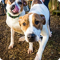 Adopt A Pet :: Rocky and Soul - Bonded Pair - Seattle, WA