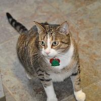 Adopt A Pet :: Mooch - Orlando, FL