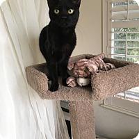 Adopt A Pet :: Cuba - El Dorado Hills, CA