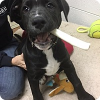 Adopt A Pet :: Comet - Lake Odessa, MI