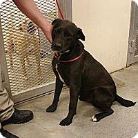 Adopt A Pet :: Scout - Fort Scott, KS