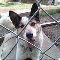 Adopt A Pet :: OREO - Raymond, NH
