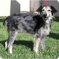 Adopt A Pet :: Mack - Orlando, FL
