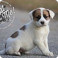 Adopt A Pet :: Bernadette - Albany, NY