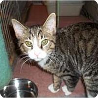 Adopt A Pet :: Ceasar - Acme, PA