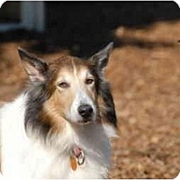 Adopt A Pet :: Nicky - Ft. Myers, FL