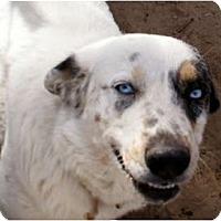 Adopt A Pet :: Skye - Glenpool, OK