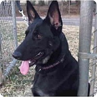 Adopt A Pet :: Jenna - Arlington, TX
