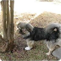 Adopt A Pet :: Max - Tyler, TX