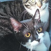 Adopt A Pet :: LITTLE BUDDIE - E. Claridon, OH