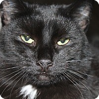 Adopt A Pet :: Rhonda St. #3 - Lunenburg, MA
