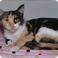 Adopt A Pet :: Calli - Medina, OH