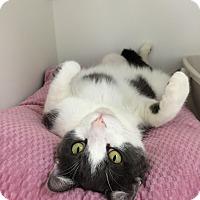 Adopt A Pet :: Sheldon - Newport Beach, CA