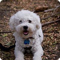 Adopt A Pet :: Tilly - Orange, CA