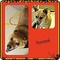 Adopt A Pet :: Sammi - Benton, AR