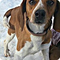 Adopt A Pet :: Jessie - Freeport, ME