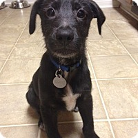 Adopt A Pet :: Zeus - Knoxville, TN
