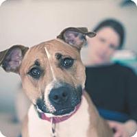 Adopt A Pet :: Lyla - Wauwatosa, WI