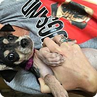 Adopt A Pet :: Harriette - Mooresville, NC