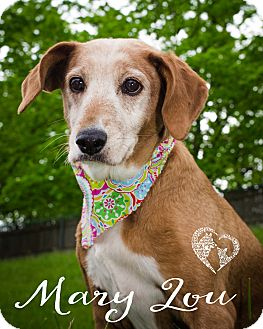 Pointer Mix Dog for adoption in Newport, Kentucky - Mary Lou