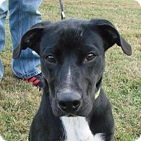 Adopt A Pet :: Hawkins - Erwin, TN