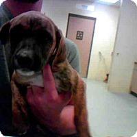 Adopt A Pet :: LESLEY - Conroe, TX